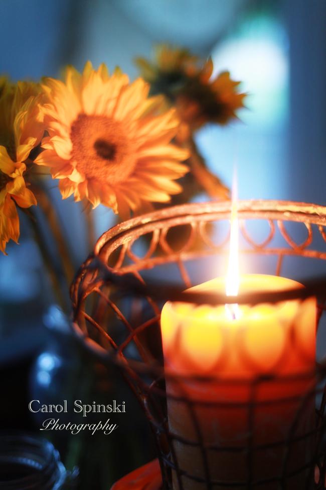 SunflowersCS
