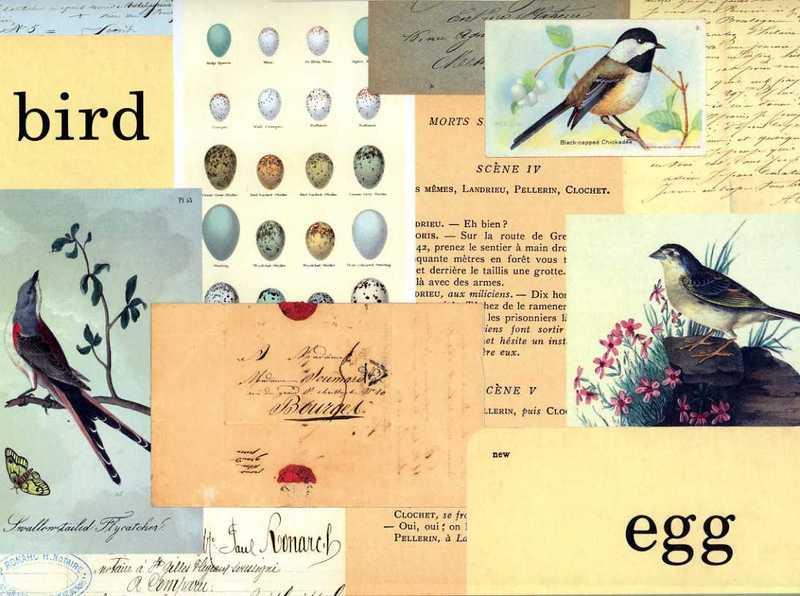 Birdfile021