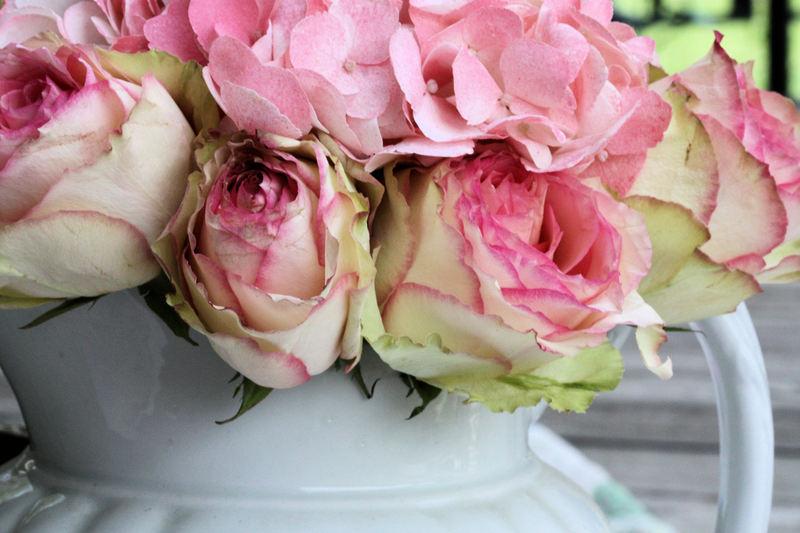 Rosesandwhitepitcher